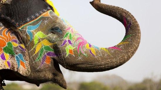 india-elephant-face